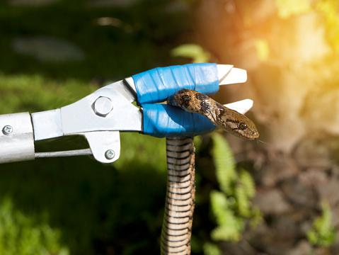 Tips for Keeping Snakes Away From Your Property